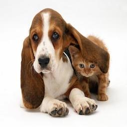Puppy Kitten Denbigh Veterinarian Newport News