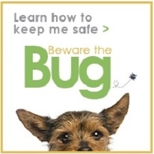 Beware the Bug