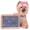 homeagain, microchip, pet ID