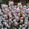Cat Population Control