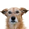 OLD DOG WITH GLASSES
