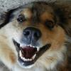 Happy dog dental Ann Arbor clean white teeth brigh