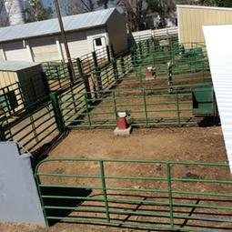 Animal stalls