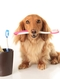 Periodontal diease in pets