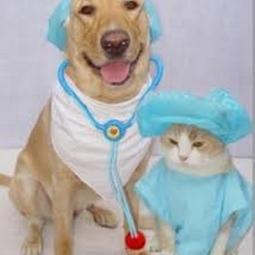 dog and cat surgery