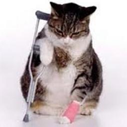 cat crutches