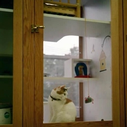 catnip cottages cat boarding