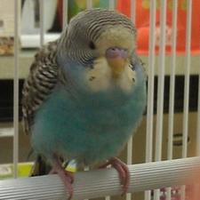 bird in hospital