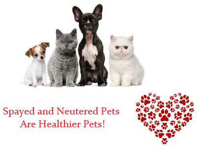 Keep Your Pet Healthy!