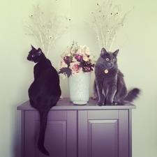 cat clinic vet veterinarian calgary