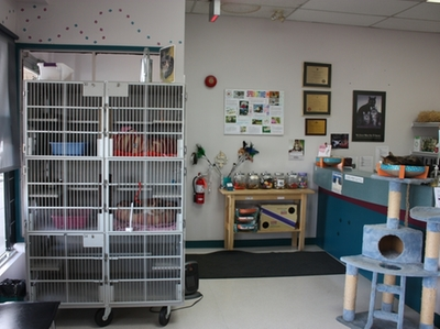 vet clinic,animal vet,animal hospital,veterinarian