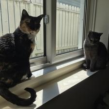 Calgary vet veterinarian animal hospital cat