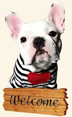 banksy,vet,liebau,frenchbulldog,clovis,dog,puppy