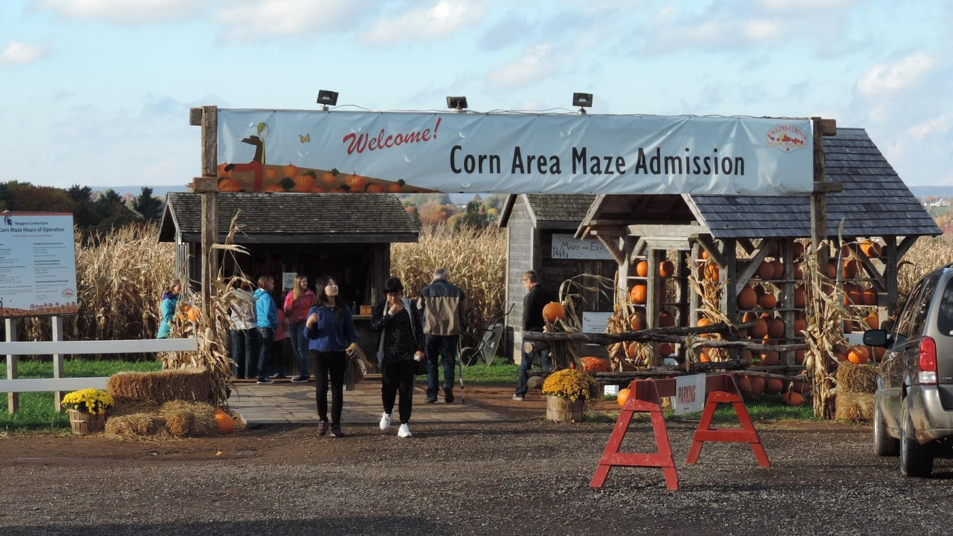 Corn Maze, Noggins Corner Farm Market