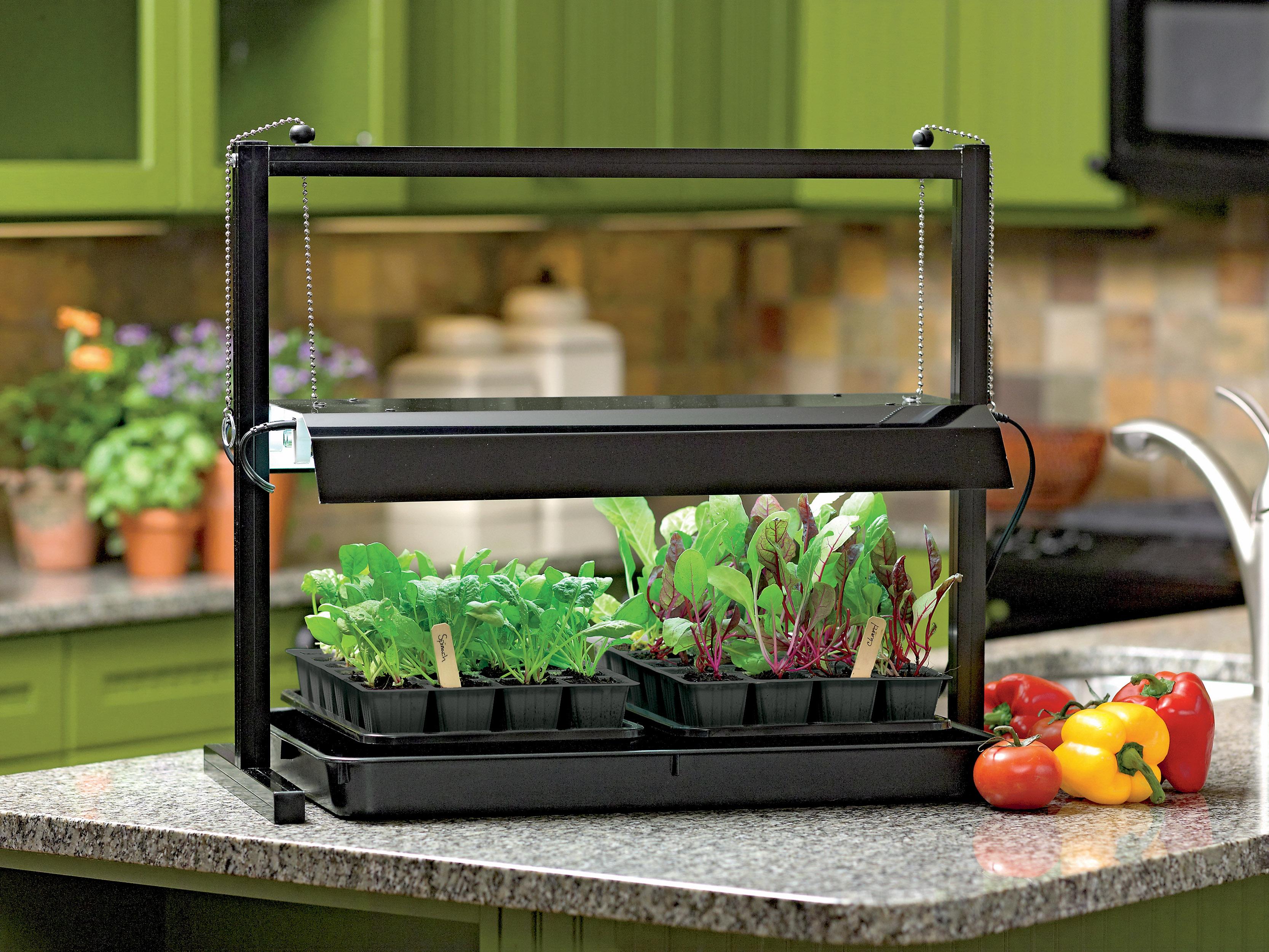 Light For Indoor Garden Homegrown flavor from an indoor garden the van horn advocate workwithnaturefo