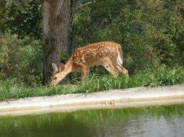 deer  white dots.jpg