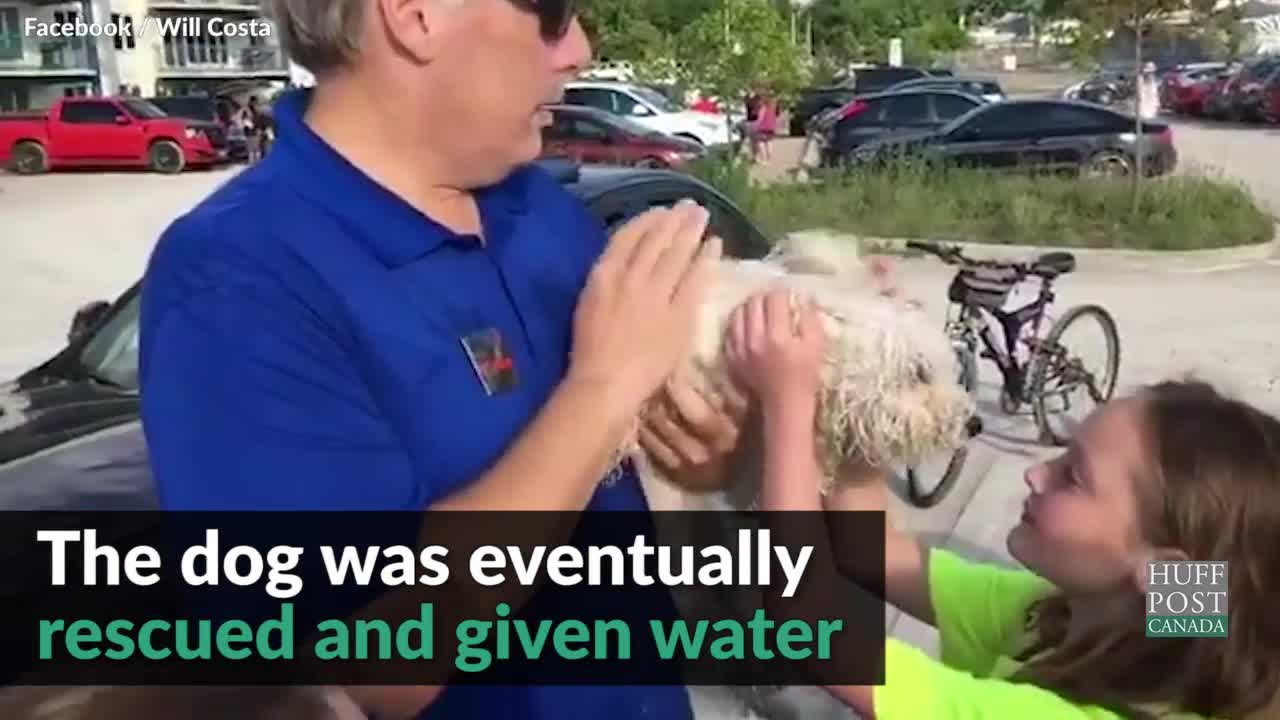 Good Samaritan Smashes Car Window To Save Dog From Heat