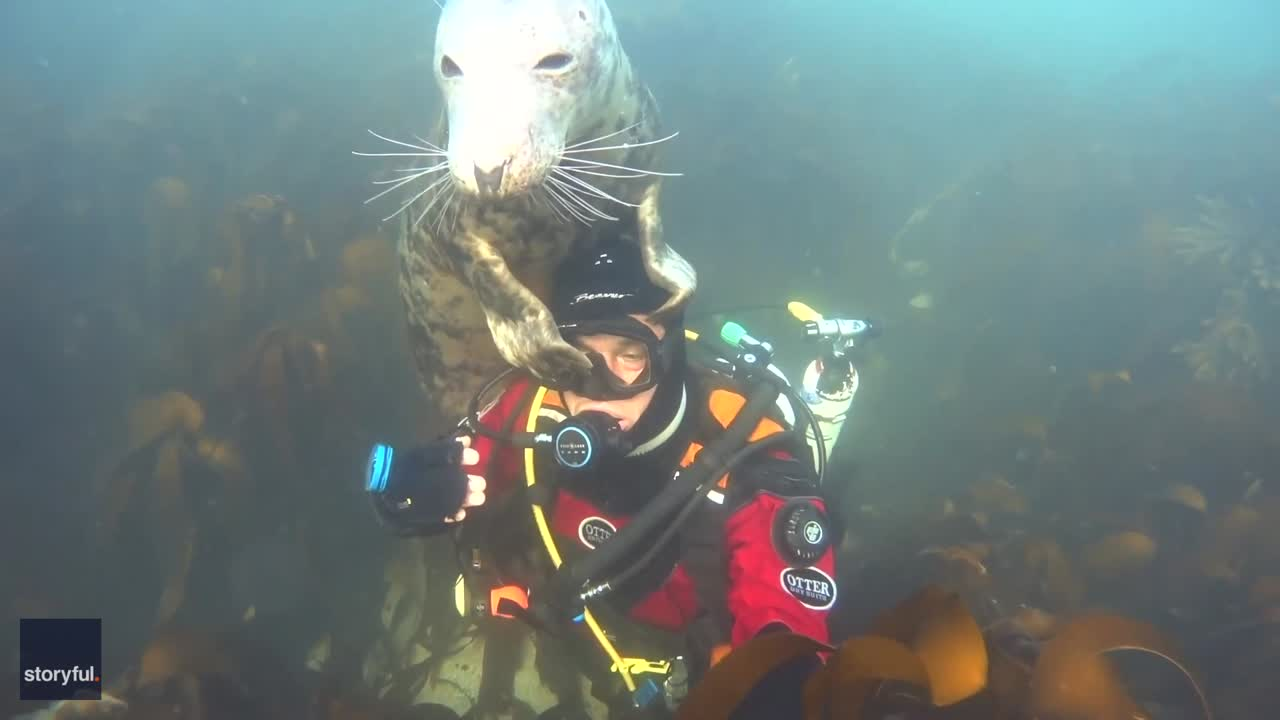 Shaking Hands Isn't a Thing of the Past for Diver and Friendly Seal