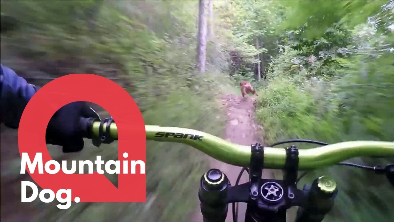 A super speedy dog loves nothing more than to run along with her mountain biking owner (RAW)