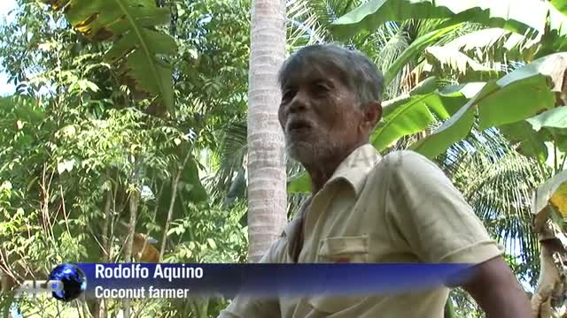 Philippine farmers hope for coconut craze windfall