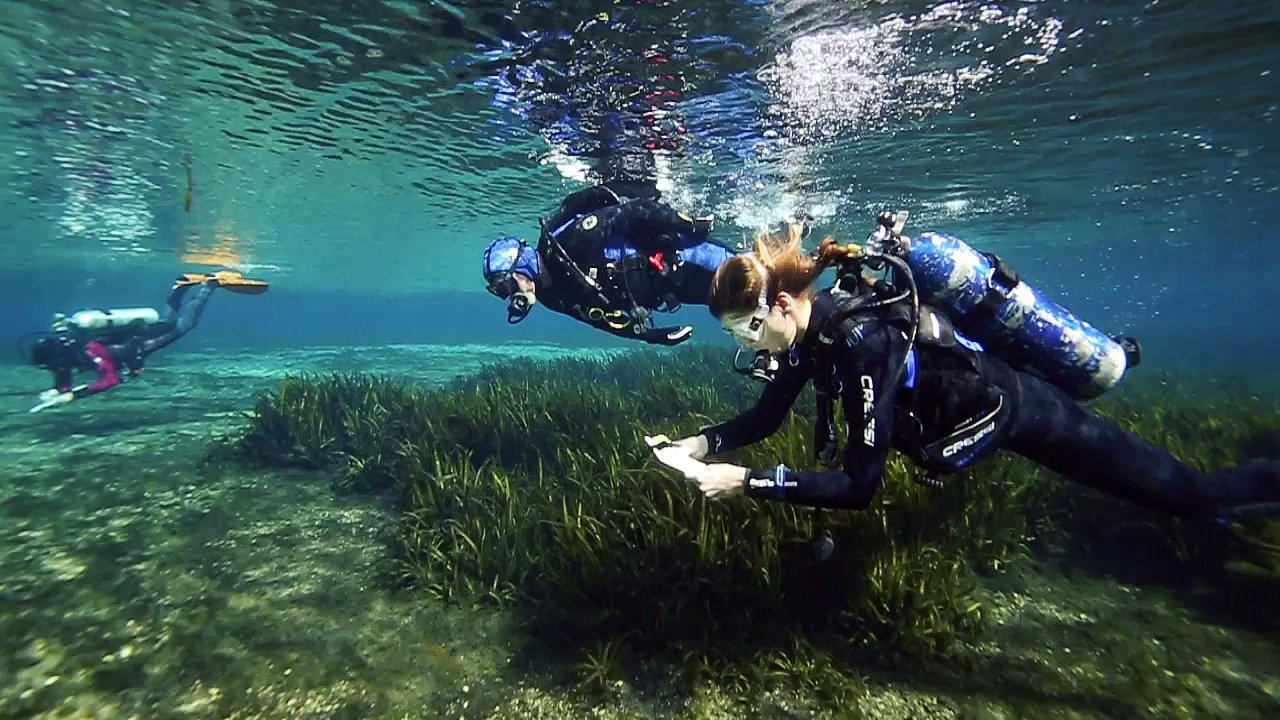 covolo diving gear part 2 Our solutions are written by chegg experts so you can be assured of the highest quality skip navigation develop a level production plan for covolo diving gear.