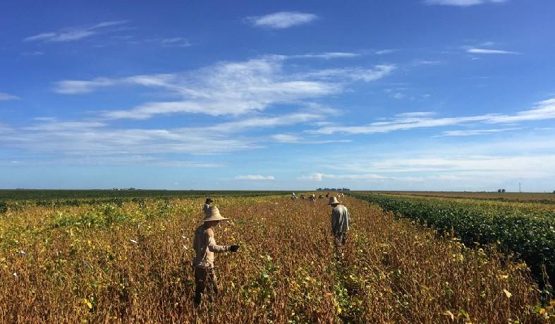 Agricultores em plantação de soja, em uma fazenda em São Desidério