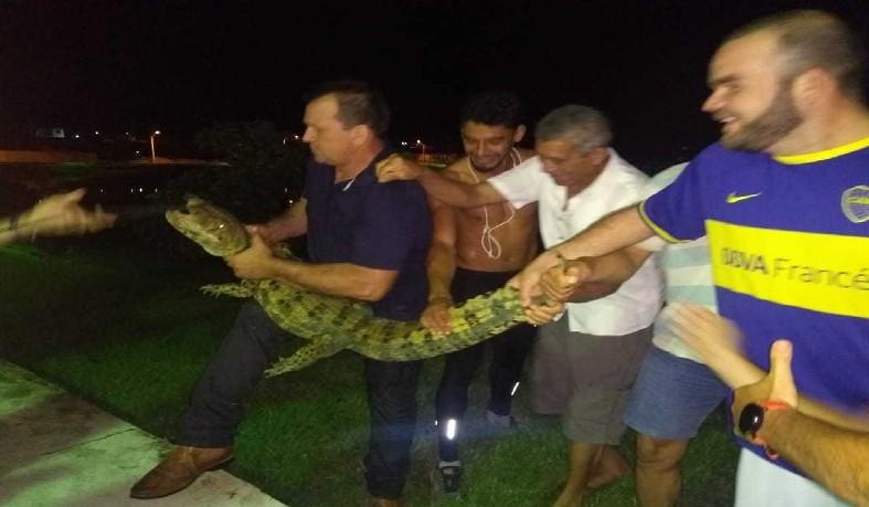 Jacaré com um metro foi encontrado em praça da cidade de Eunápolis, no sul da Bahia