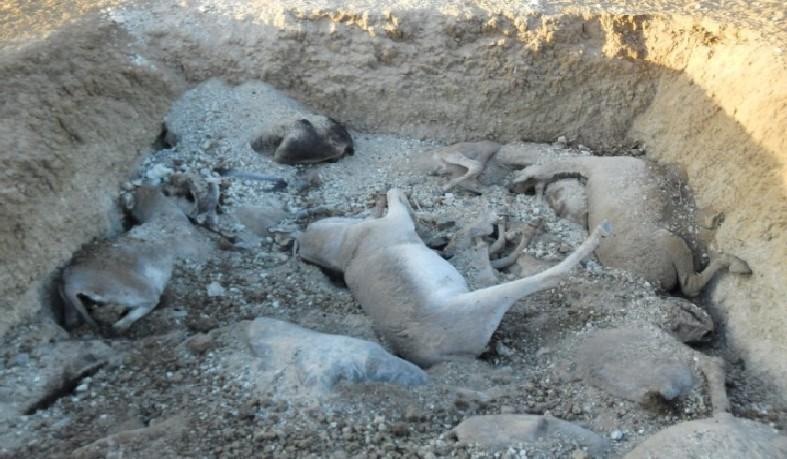 Jumentos sofrem maus-tratos e muitos são mortos em Euclides da Cunha