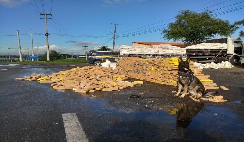 Caminhoneiro é detido na BA com grande quantidade de maconha escondida em carga de farinha