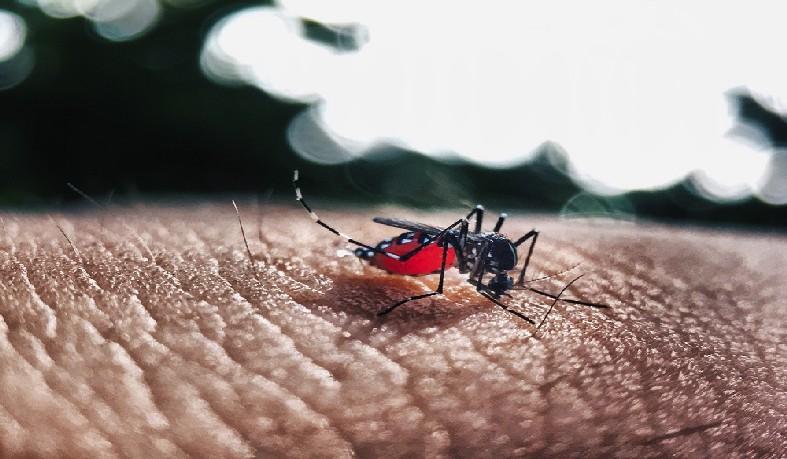 Bahia lidera lista dos estados do nordeste com mais casos de dengue