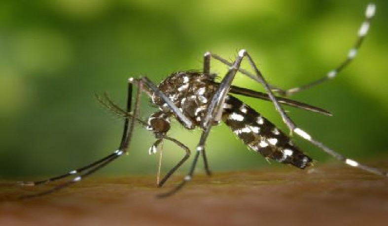 Até o momento, consta um óbito confirmado laboratorialmente para chikungunya na Bahia