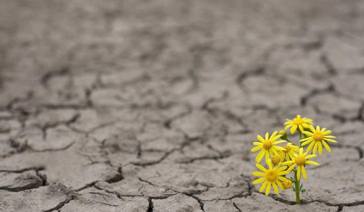 Secas afetam milhões de pessoas ao redor do mundo