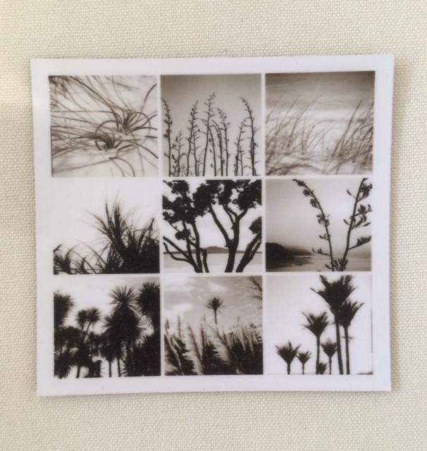 Fridge Magnet NZ Flora Lomo Print