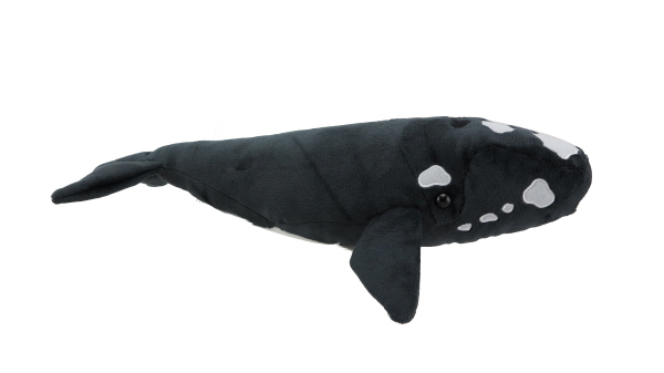 Southern Right Whale with Sound Soft Toy