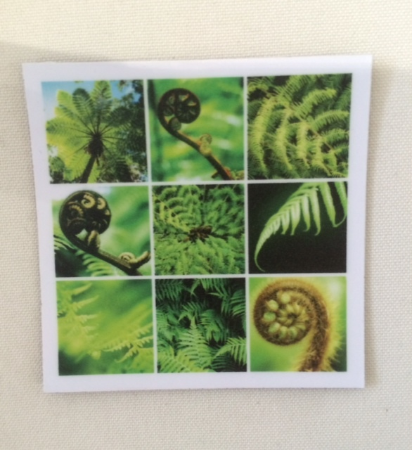 Fridge Magnet Ferns Lomo Print