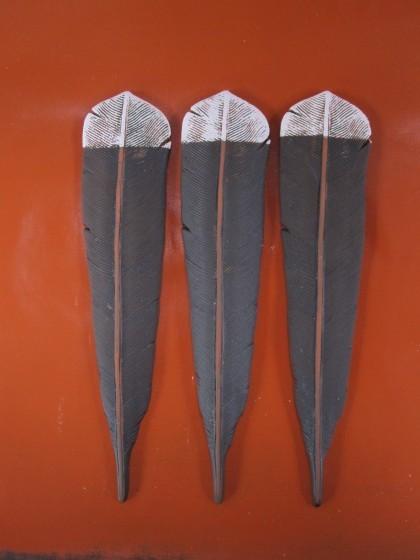 Huia Feather