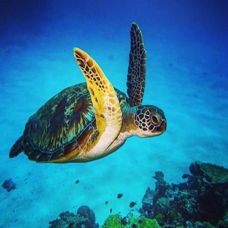 Mergulho em Ilhabela-SP (Agende sua data)