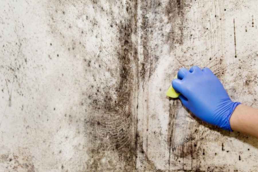 Schimmel verwijderen | 3 simpele stappen voor schimmel op plafond ...