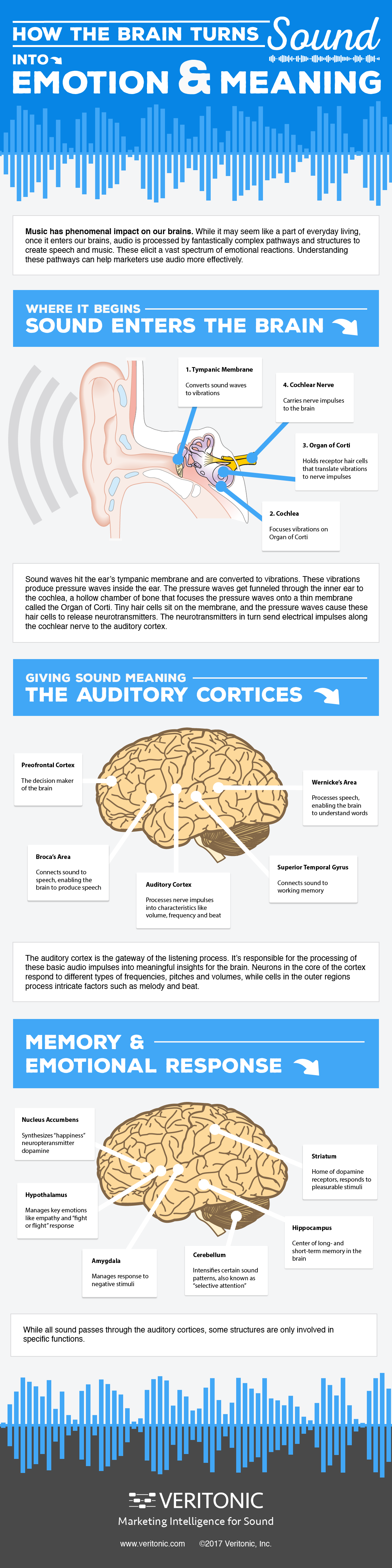 How the brain turns sound into emotion and meaning - Veritonic