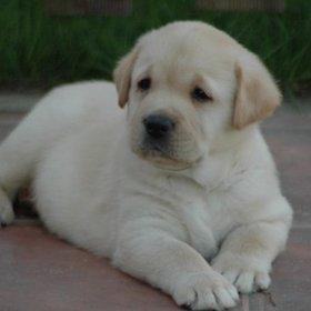 A_doglover