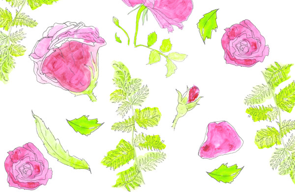 Ferns & Roses