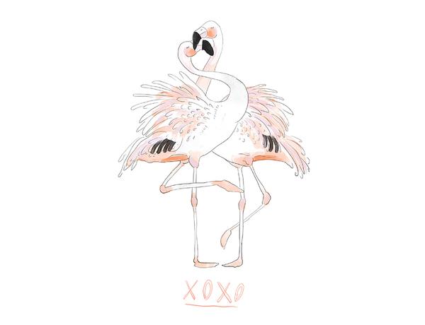 Flamingos, xoxo