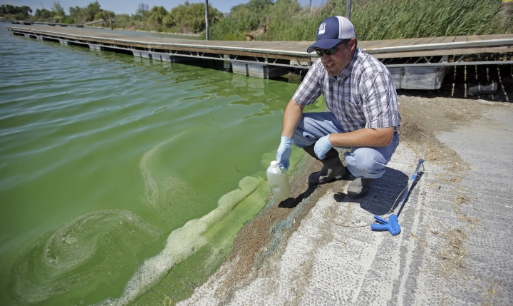 FILE - This July 20, 2016, file photo, Jason Garrett, water quality bureau director at the Utah County Health Department, looks at the water in Utah Lake Wednesday, July 20, 2016, near American Fork, Utah. Scientists from the U.S. Geological Survey will study how nutrient levels contribute to algae bloom outbreaks on the heels of this summer's massive algae bloom that closed Utah Lake, sickened people and left farmers scrambling for clean water during some of the hottest days of the year. (AP Photo/Rick Bowmer, File)