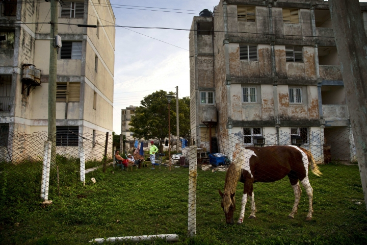 "In this Sept. 1, 2016 photo, a horse eats grass in the garden of a residential building in Caibarien, Cuba. Pure tourism remains illegal under U.S. regulations that allow 12 categories of travel to Cuba including religious and sports activities and educational travel promoting ""people-to-people"" contact but new U.S. regulations have made the ban unenforceable. (AP Photo/Ramon Espinosa)"