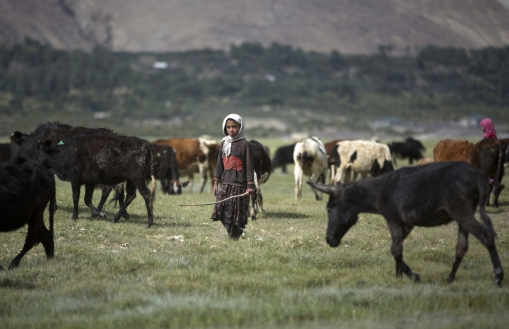 In this Aug. 18, 2016 photo, a teenage girl takes care of her animals in Qala-e Panja village, Wakhan district of Badakhshan province, far northeastern Afghanistan. The Wakhan corridor, which has been named Afghanistan's second national park, is the country's most -- perhaps only -- peaceful region. But it is so poor, even for Afghanistan, that people borrow food and children go barefoot during the long, harsh winters. (AP Photos/Massoud Hossaini)