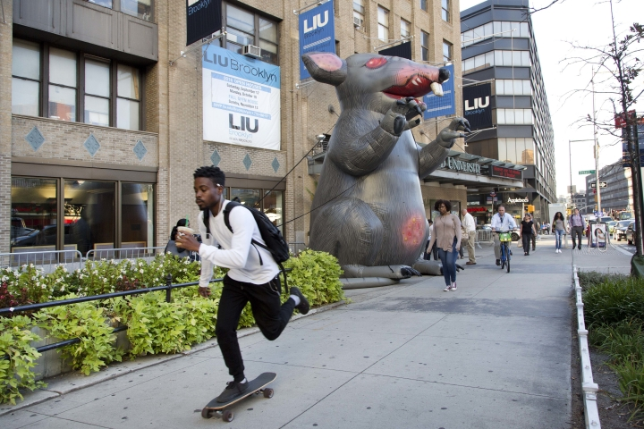 A student skateboards to class at Long Island University's Brooklyn campus, Tuesday, Sept. 13, 2016 in New York. Behind him is an inflatable rat, part of a demonstration by the school's faculty. Hundreds of professors have been locked out of their classrooms because of a labor dispute, forcing students to take classes with replacement teachers rushed into service at the start of the school year. (AP Photo/Mark Lennihan)