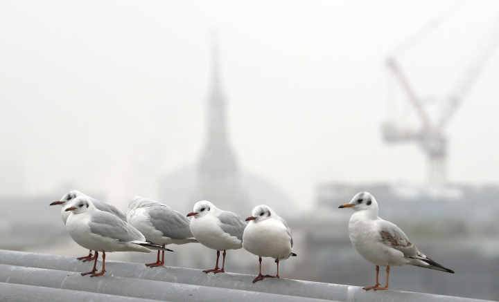 Gulls huddle on the Millennium Bridge over the River Thames as fog shrouds London, Monday, Jan. 23, 2017. Freezing fog covered the capital on Monday as cold weather conditions continued. (AP Photo/Kirsty Wigglesworth)