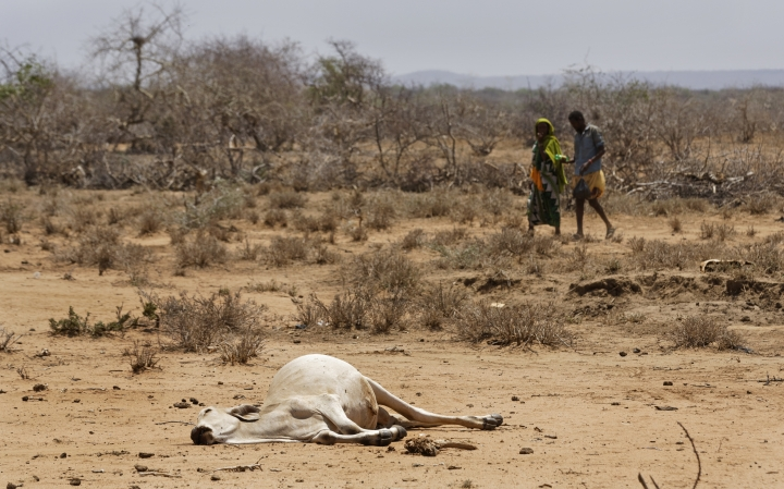 "Villagers walk past the carcass of a dead cow in the drought-affected village of Bandarero, near Moyale town on the Ethiopian border, in northern Kenya Friday, March 3, 2017. The U.N. humanitarian chief, Stephen O'Brien, toured Bandarero village on Friday and called on the international community to act to ""avert the very worst of the effects of drought and to avert a famine to make sure we don't go from what is deep suffering to a catastrophe."" (AP Photo/Ben Curtis)"