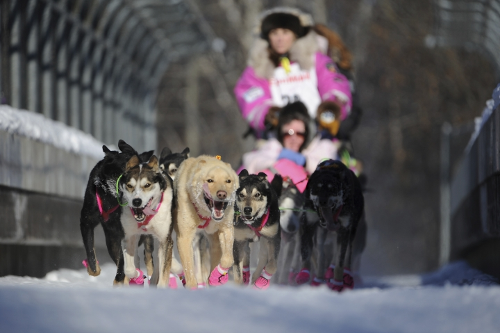 Dee Dee Jonrowe, of Willow, mushes during the ceremonial start of the Iditarod Trail Sled Dog Race in Anchorage, Alaska, Saturday, March 4, 2017. (AP Photo/Michael Dinneen)