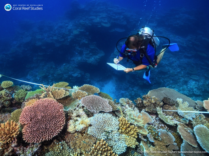 In this October 2016 photo provided by ARC Center of Excellence for Coral Reef Studies scientist Andrew Baird survey healthy reefs between Mackay and Townsville on Australia's Great Barrier Reef. A study of Australia's Great Barrier Reef shows that reducing pollution and curbing overfishing won't prevent the severe bleaching that is killing coral at catastrophic rates. In the end, researchers said, the only way to save the world's coral from heat-induced bleaching is with a war on global warming. While local protection of reefs can help damaged coral recover, such efforts won't stop bleaching from happening. (Tane Sinclair-Taylor/ARC Center of Excellence via AP)